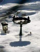 Winter Birdbath Hubert J Steed