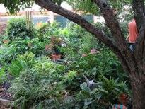 LaGuardia Corner Garden Janice Pargh