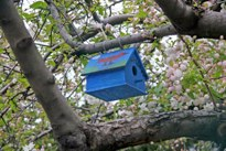 Flowering Apple Tree Hubert J Steed