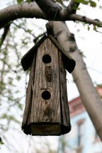 Bird House Hubert J Steed