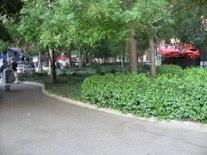 LaGuardia Garden Janice Pargh