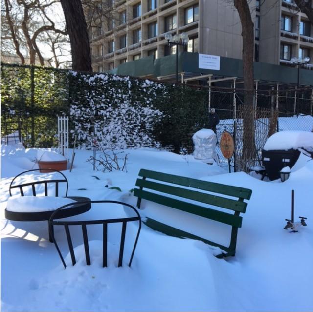 January 2016, garden Snow