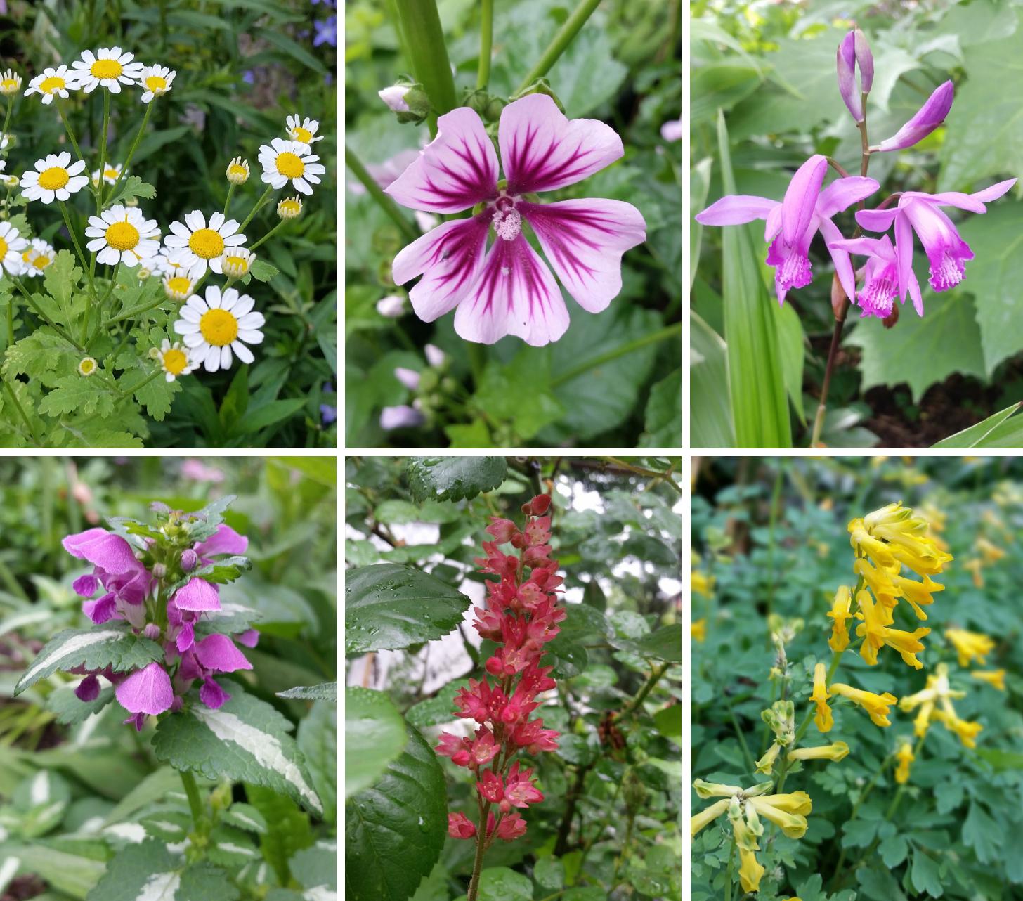 Flowers big and small – LaGuardia Corner Garden