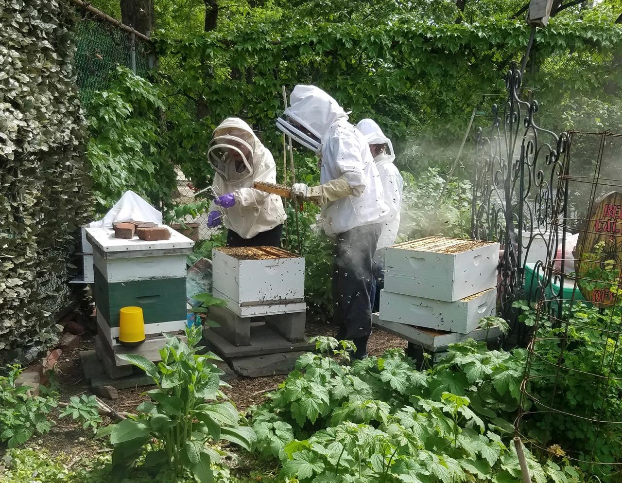 LaGuardia Corner Garden - Community Gardening in NY at its
